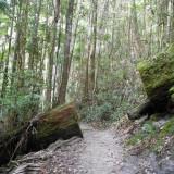 Week 12: K'gari (Fraser Island) II