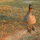 Week 24: Lake Tinaroo