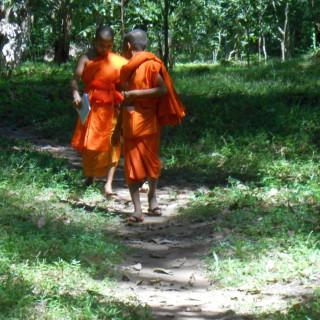 Week 31: Angkor Archaeological Park Colour